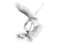 thumbs_egrets1