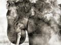 thumbs_elephant-amboseli